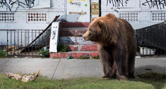 bear_mobile